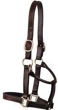 Bobby's Leather Halter-Warmblood-Black with Brass