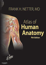 Atlas of Human Anatomy, 4th Edition (Netter Basic Science) by Frank H. Netter MD