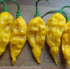 Bhut Bih Jolokia Chili yellow fiercest Chili 10 Seeds