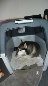 IATA compliant Dog Flight Crate Extra Large, Swap with XXL and cash..