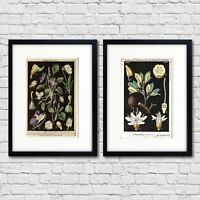 Vintage Botanical Scientific Illustration Print Size A3 Luxury Satin Paper No.2