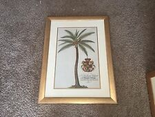 """G. D. Ehret """"Coconut Palm"""" Attributed to Georg Ehret Framed Lithograph"""