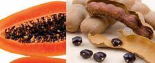 10 papaya & 10 sweet tamarind tree/plant/fruit seeds *10 free som-o*