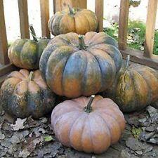 FrencHeirloom MUSQUE de PROVENCE Pumpkin Fairytale RARE❋15 SEEDS❋CHEF'S FAVORITE