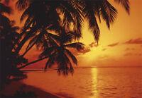 VLIES Fototapete STRAND (276V)-360x250cm-Digitaldruck-7 Bahnen-Palmen Meer Sonne