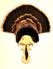 Knotty Pine Woodturkey Fan Plaque Mounting Kit (Model: Spurred) Turkey Mount
