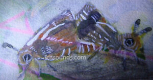 original butterfly aceo painting