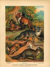 Original Antique 1880 Chromolithograph Foxes - Common Tenrec Arctic Blue Silver