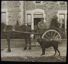 Glass Magic Lantern Slide VICTORIAN GENT IN HORSE & BUGGY WITH DOG C1890 PHOTO