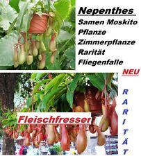 20x Nepenthes zanzara pianta stanza pianta rarità Mosche Trappola semi RAR #236