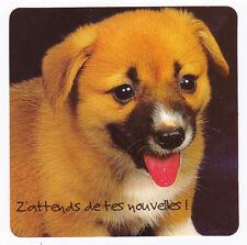CHIEN  Chiot   CHIENS  carte postale   n°  FFU 0070  Z'attends de tes nouvelles