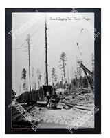 Historic Sunset Logging Co. - Timber, Oregon Logging Postcard 1