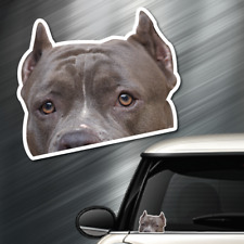 (1) Pitbull Staffordshire Terrier DOG Peeper Sticker Window Peep Decal Car Auto