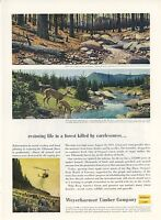 1959 Weyerhaeuser Timber Co. Ad Tillamook Forest Oregon Before & After 1933 Fire