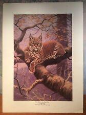 "Vintage W. J. Wilwerding Print ~ Bay Lynx Or Bob Cat ~ 8 1/2"" X 11 3/4"""