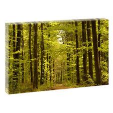 Deko-Bilder mit Panorama von Wald