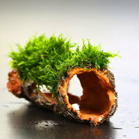 Flame moss Decaying trunk - Aquarium Ornament decoration plants tank low co2
