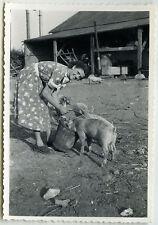 PHOTO ANCIENNE - COCHON FERME FEMME NOURRISSAGE - PIG EATING - Vintage Snapshot