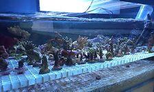 Coral starter frag pack Soft/LPS/SPS 5 choice pack