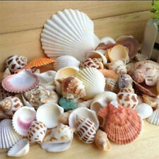 DIY Mixed Seashells Lot Sea Shells Beach Ocean Aquariums Decor Crafts