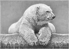Polar Bear print picture wildlife animal wall art poster decor A3 sketch drawing