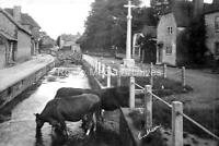 Rcv-16 Cows in Stream, East Meon, Petersfield, Hampshire. Photo