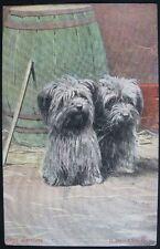 Vintage 1908 Cute Skye Terriers Dogs Postcard Dixon