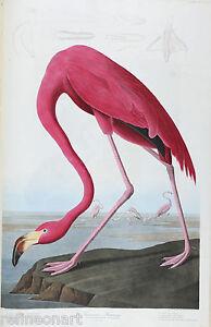 John James Audubon American Flamingo Giclee Canvas Print