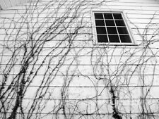 Neal White Photo, Structure with abstract vines,  1970s