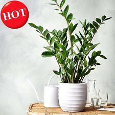 30pcs Potted Flowers Money tree seeds, Balcony Bonsai Plant For Garden & Home