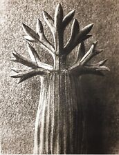 1942 FOTO ORIGINALE STAMPA ROTOCALCO PIASTRA 76. Karl Blossfeldt astratto botanico