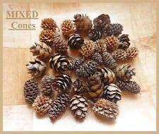 21 MIXED MINI pine cones in 3 different types - ideal for Magnolia Tilda