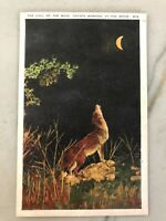 "Vintage Postcard ""Call of the Wild, Coyote Barking at the Moon"""