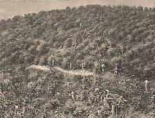 Coffee Plantations. Brazil 1885 old antique vintage print picture