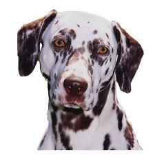 Artículos de color principal marrón l para perros