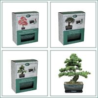 Bonsai Tree Grow Your Own Kit Gift Set, Pine, Olive, Gum ideal for a Gift