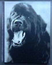GENTLE GIANTS BOOK OF NEWFOUNDLANDS - BRUCE WEBER - 1994 FIRST EDITION SIGNED