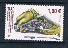 TAAF/FSAT Fish French & Colonies Stamps