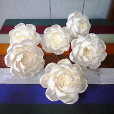 6 Peony Roses Sola Wood Diffuser Flowers with Pollen 10 cm Dia.