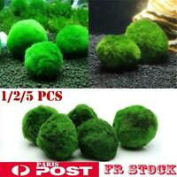 Plantes vivantes 3-5cm Vert Marimo Moss Ball Aquarium Décor Aquatique