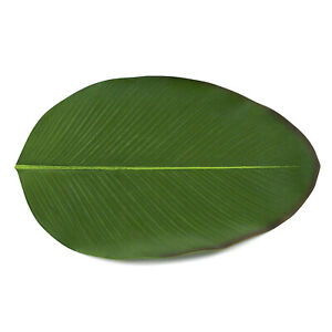 Banana Bowl Pads Turtle Back Leaf Placemat Plant Party Tail Tropical Dinner Mats