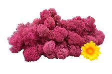 Muwse Islandmoos Köpfe V 4-12cm 50g Veilchen Pink handgereinigt Moos Deko