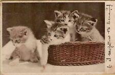 140251 ANTICA CARTOLINA GATTI CATS