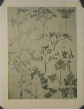 Chromolithographie de Mathurin Méheut, Plantes, XIXe