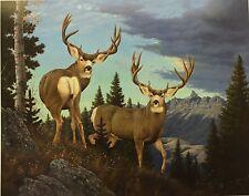 "Mule Deer Print 22x17.5  ""Rare Find"" By Tom Mansanarez"
