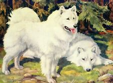 1930s Antique Samoyed Dog Art Print Nina Scott Langley Samoyed Art 3702-L
