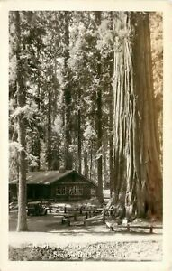 CALIFORNIA RPPC POSTCARD: THE MUSEUM GIANT FOREST SEQUOIA NAT'L PARK, CA