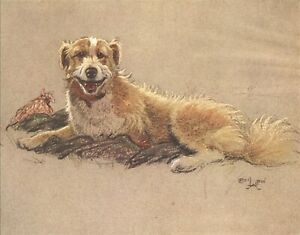 54. Cecil Aldin Dozen Dog Yellow Eyed Collie Reprint A4 Buy 1 get any print free