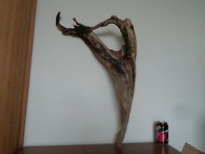 Driftwood Piece heavy golden  sculpture. Bogwood  for garden viv, or Display
