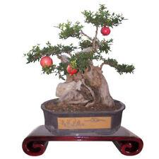 20pcs/lot bonsai pomegranate seeds Very Sweet Delicious Tree fruit,succulen K7F0